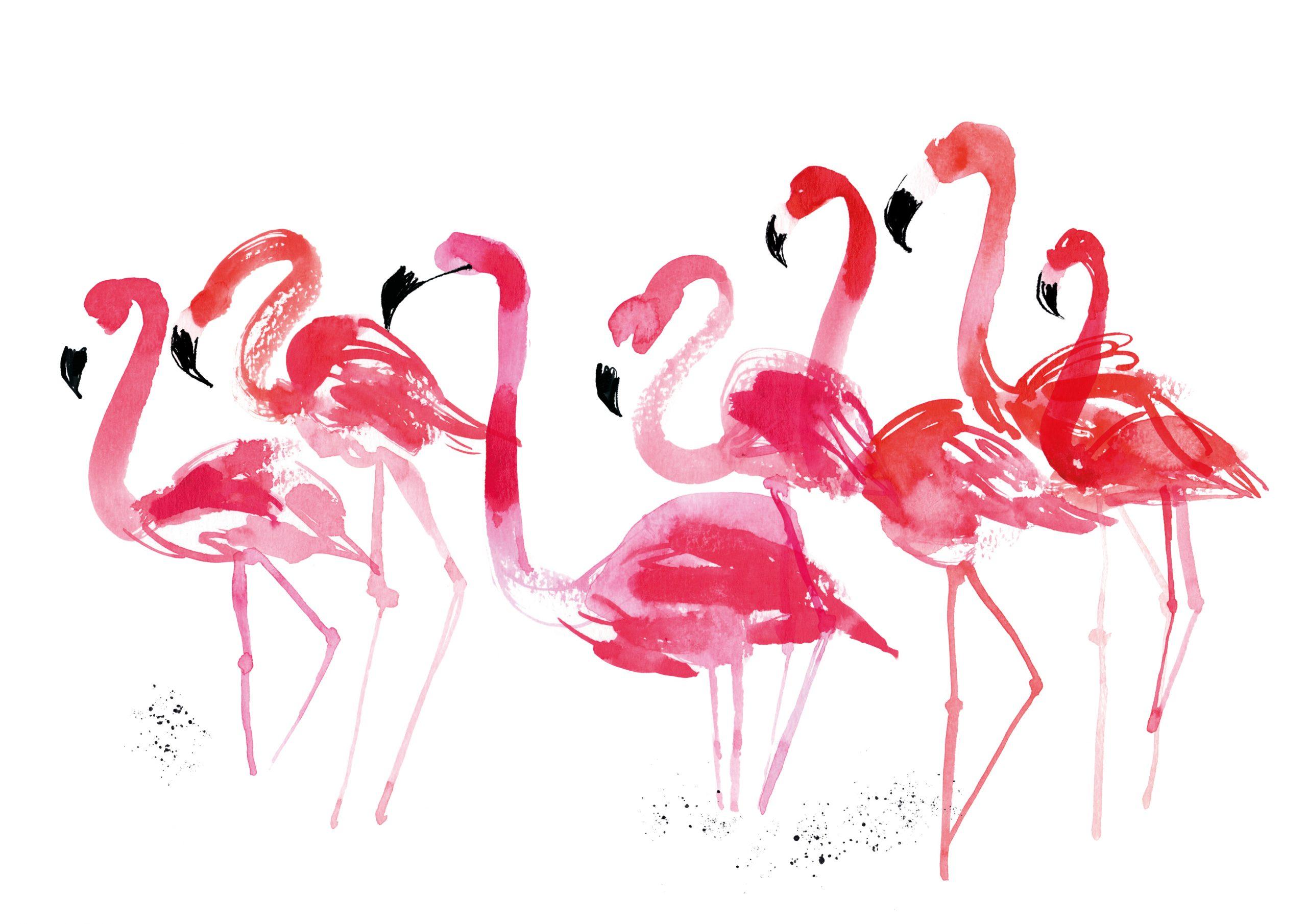 A4-flamingos_rgb