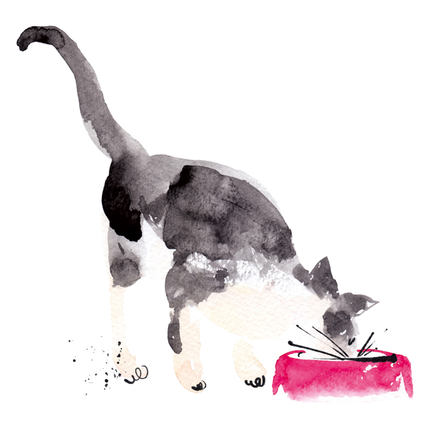 05.cat eating